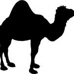 Camel Single