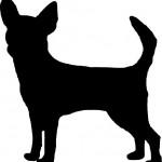 Dog Chihuahua 2