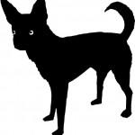 Dog Chihuahua 3