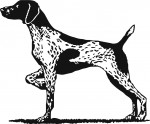 Dog Pointer